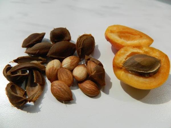 Как семена абрикоса используют для лечения рака и хронических заболеваний