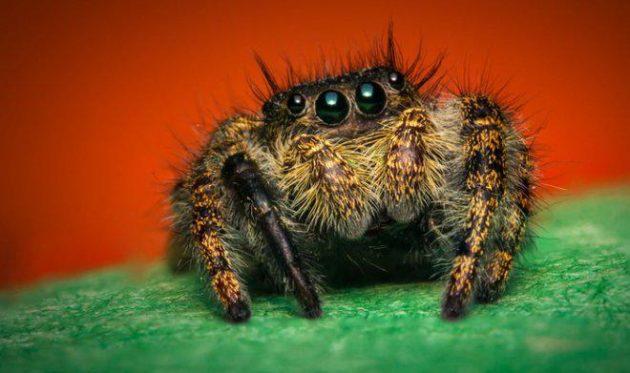 Вы больше не увидите ни одного паука или мыши в своём доме. Пишите что нужно сделать...