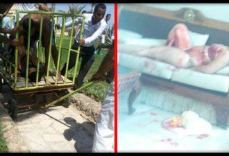Опять Убийства На Пляже Египта: Двоих Украинцев Закололи Ножом!