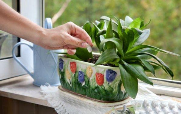 Три простейших трюка для здоровья комнатных растений. Они оживут и зацветут!