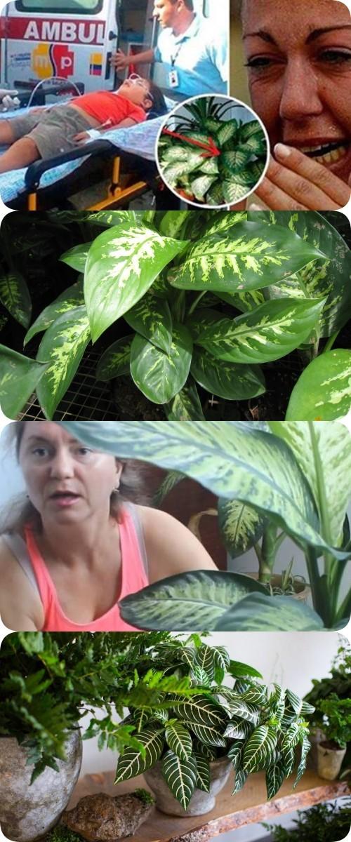 Это домашнее растение способно убить ребенка за 1 минуту, а взрослого — за 15.