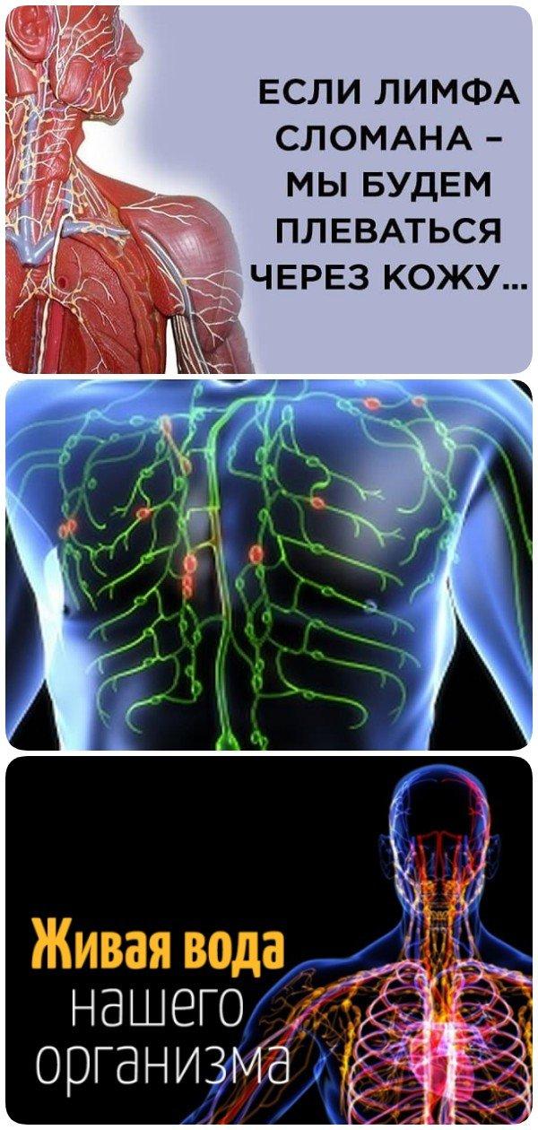 Оказывается, мы практически ничего не знаем о лимфатической системе!