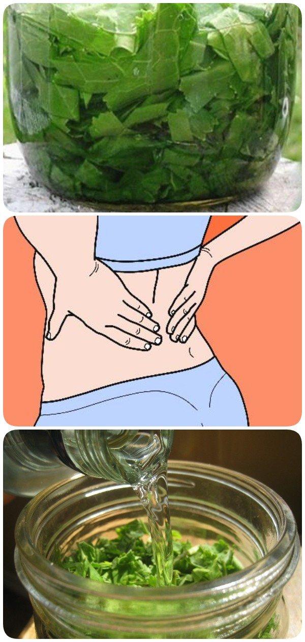 При болях в спине и суставах поможет растирка из листьев хрена