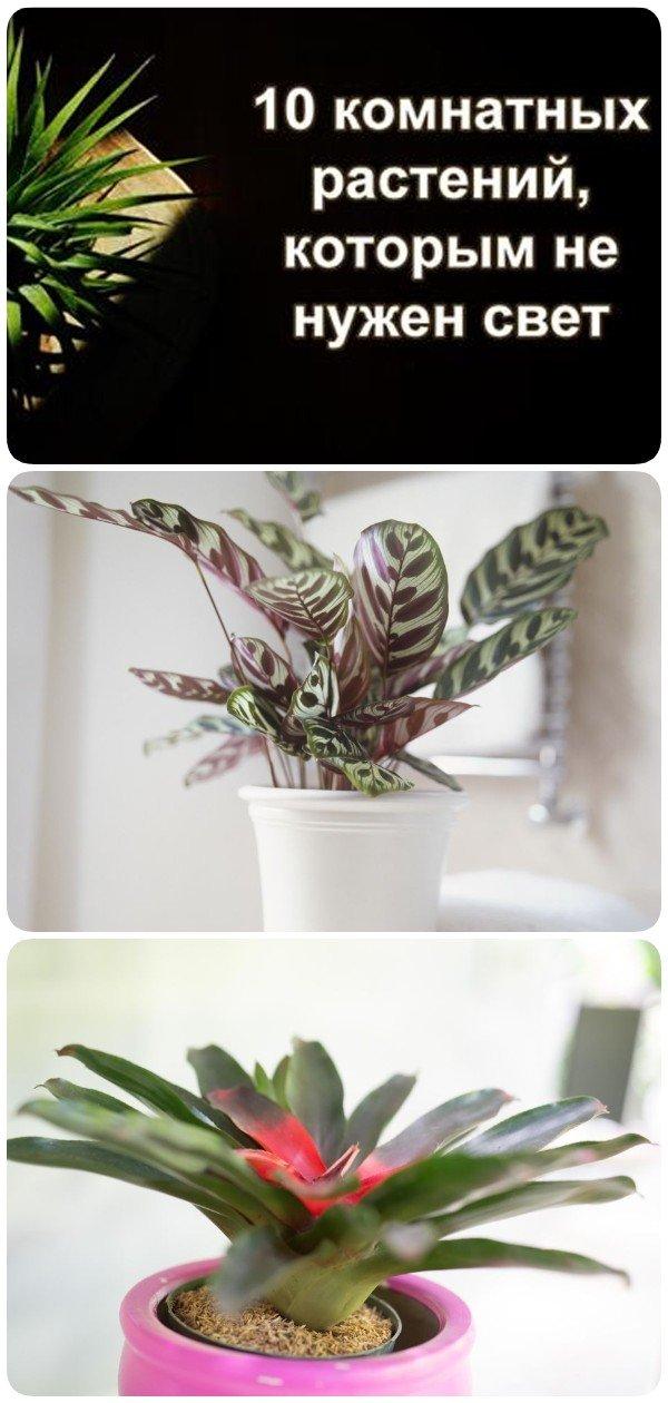 10 удивительных комнатных растений, которые обожают темноту!