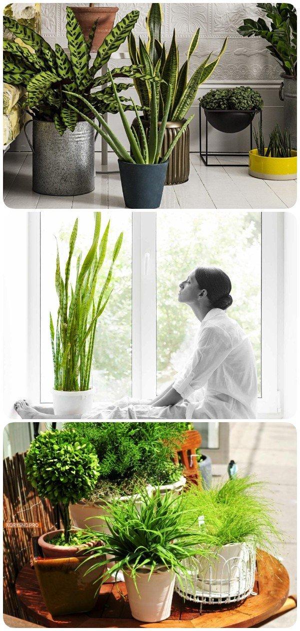 10 лучших комнатных растений, которые очищают воздух