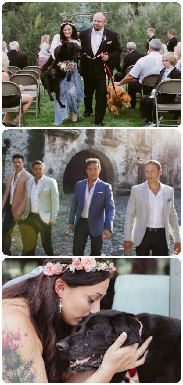 Умирающий пёс пришел на свадьбу своей хозяйки. Очень трогательно, до слёз…