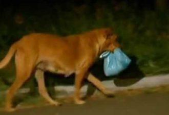 Каждую ночь эта собака убегала из дома. Хозяева пришли в ужас, когда проследили за ней.