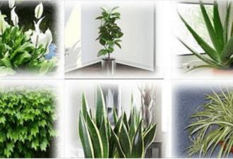 Эти растения – лучшие очистители воздуха в доме! Они обязаны стоять у вас на подоконнике!