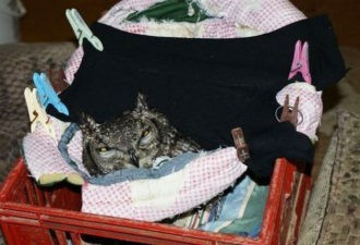 Парень спас эту сову от смерти. Вы не поверите, когда узнайте как сова отблагодарила парня и его семью!