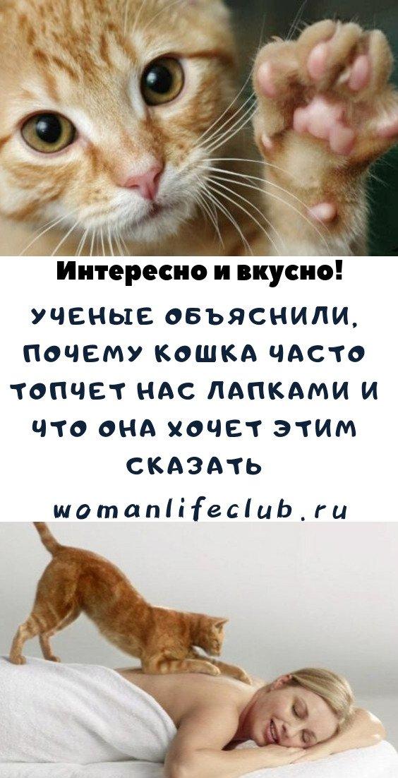 Ученые объяснили, почему кошка часто топчет нас лапками и что она хочет этим сказать