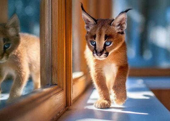 Самые милые, но смертельно опасные животные