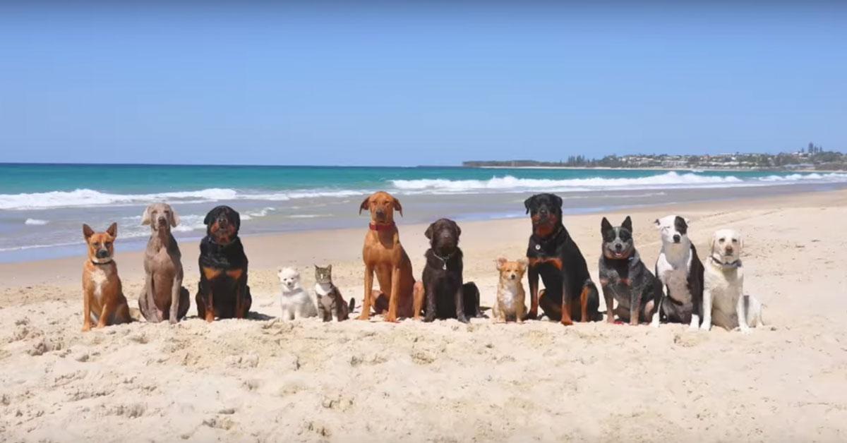 11 собак и известная кошка Диджа — в съемках клипа на пляже. Ничего позитивнее вы еще сегодня не видели!