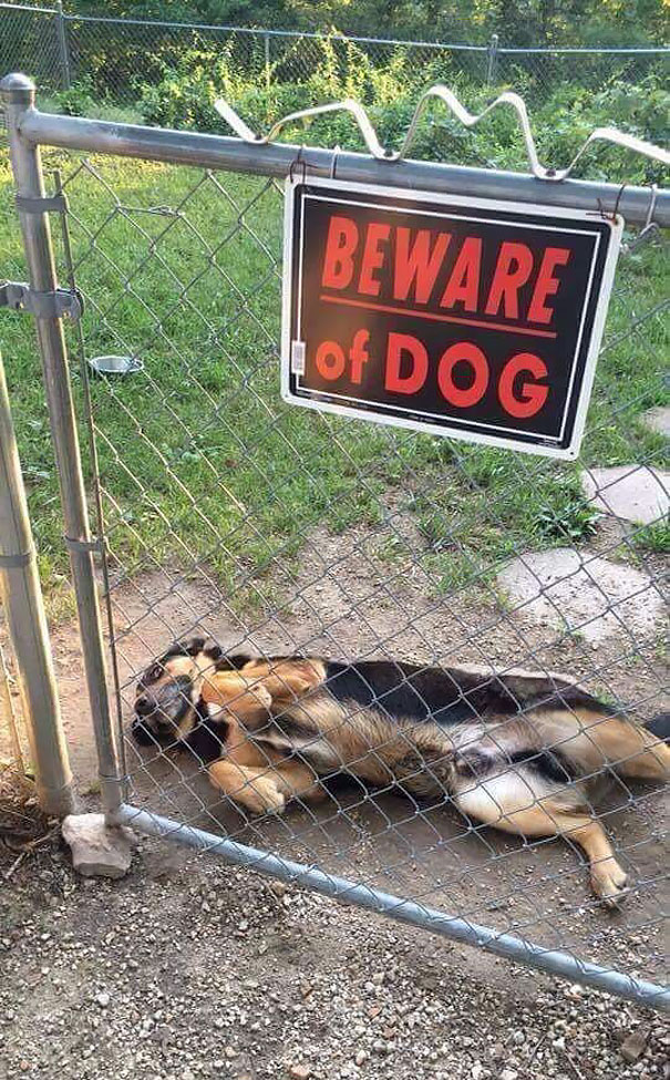 10 ну очень опасных животных, которые скрываются за табличкой «Осторожно, злая собака!»