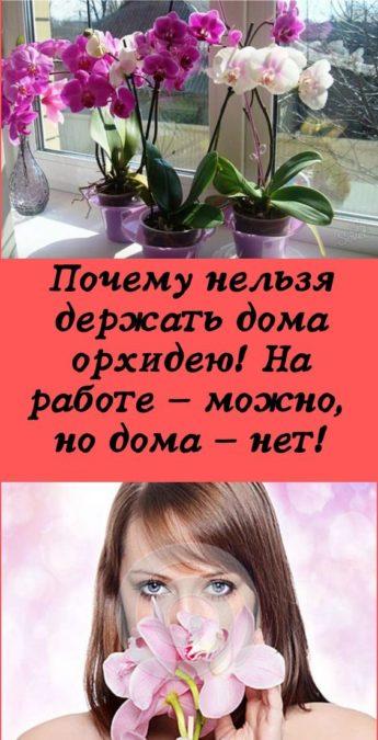 Почему нельзя держать дома орхидею! На работе — можно, но дома — нет!