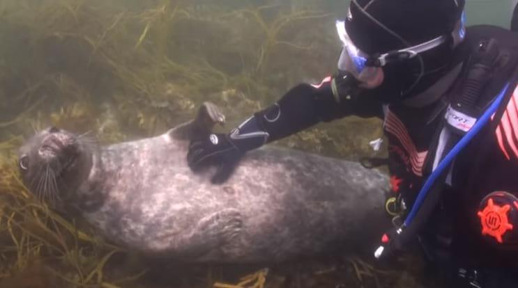 Тюлень подплыл к аквалангисту и показал лапкой ЧЕГО именно хочет. Все! Мой мимиметр сломался