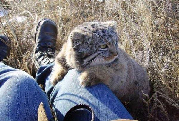Фермер был уверен, что нашел обычных домашних котят