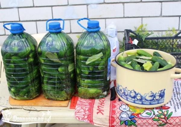 Солим огурцы в пластиковых бутылках! Получаются настоящие бочковые огурчики, очень вкусно!